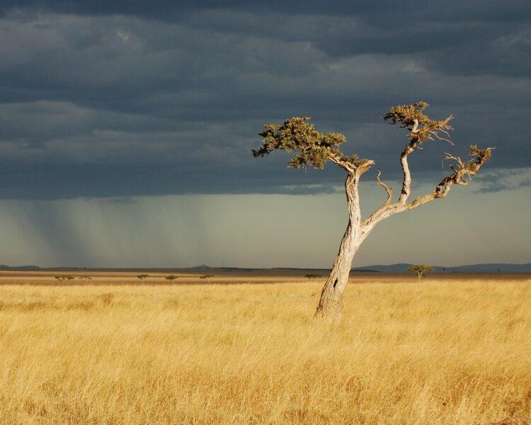 trip to Kenya in April,